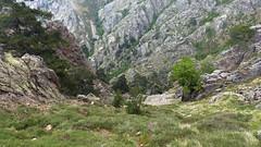 Le couloir de descente vers le ruisseau de Vetta di Muru à Calancha alla Lama