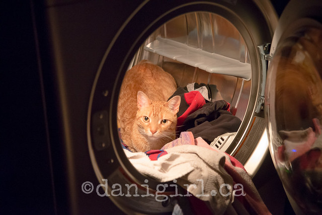 Willie in the dryer