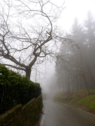 The tree in the fog