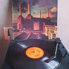 Pink Floyd - Animals #animals #pinkfloyd #1977 #lp #vinyl #rogerwaters #davidgilmour #nickmason #richardwright #vinyl4life #vinilo #acetato #stormthorgerson #classicrock #progressiverock #turntable #33rpm #rock