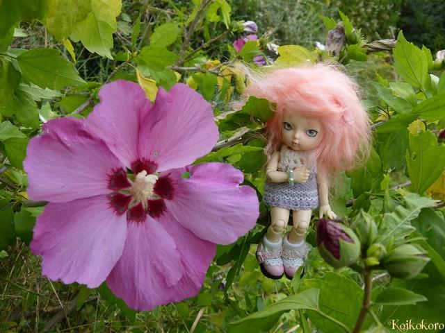 Dragée et la fleur de mauve !