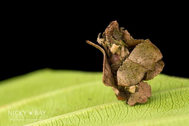 Bagworm moth larva (Psychidae) - DSC_0279