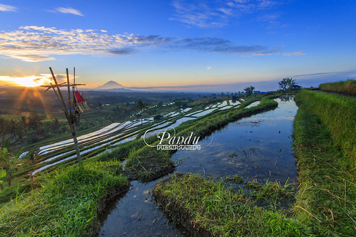 morning bali reflection pool sunrise indonesia landscape photography tour village bamboo offering guide blackcard jatiluwih baliphotography ricefiled balitravelphotography baliphotographytour baliphotographyguide