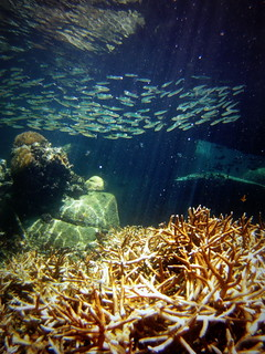 Coral bleaching in the Gulf of Thaialnd