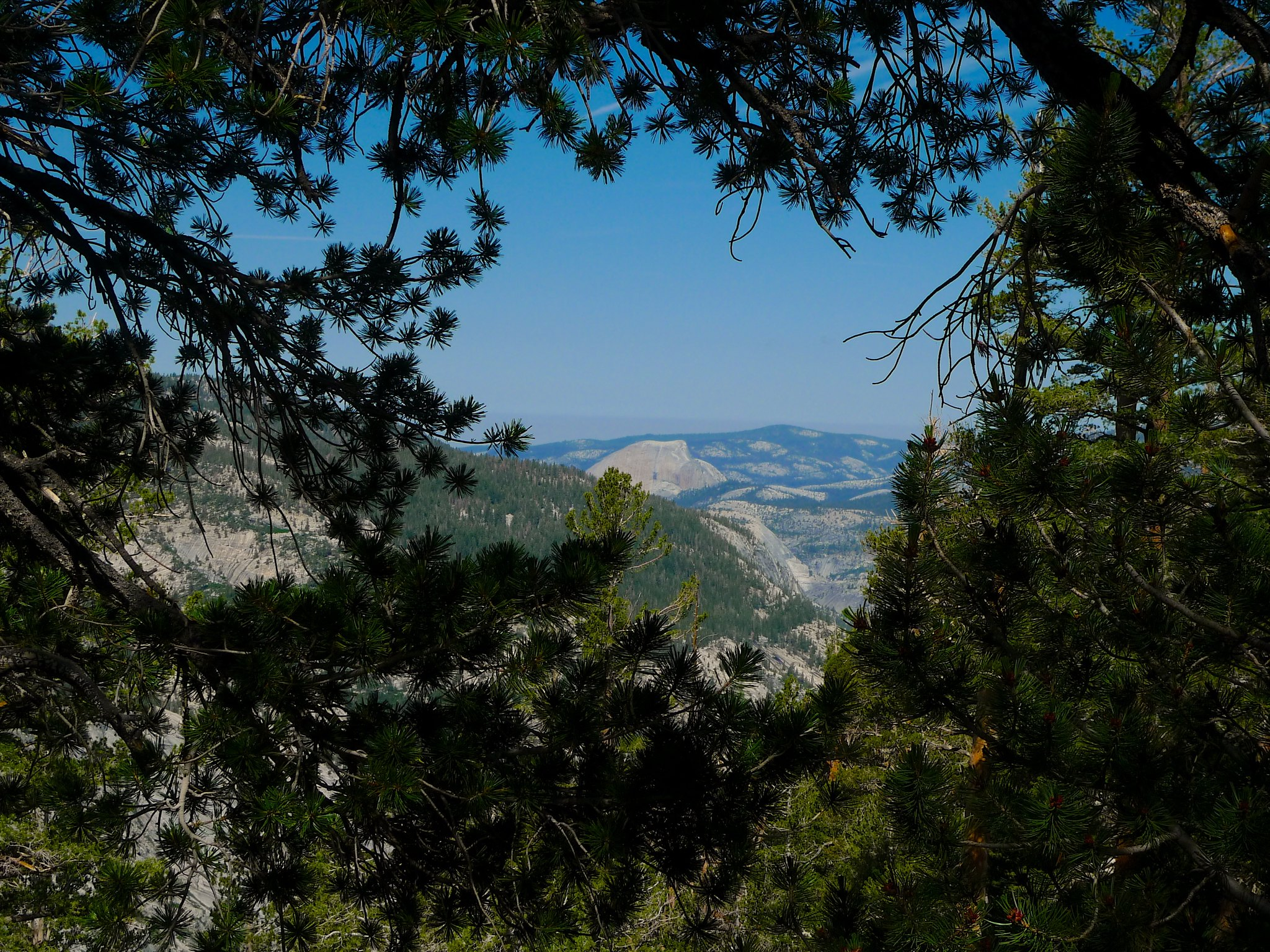 Half dome peeks through from the High Trail between Isberg Pass and Vogelsang