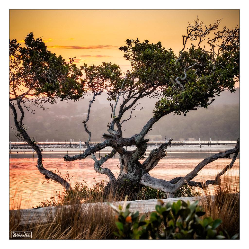 Coast merimbula