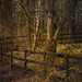 Small photo of Little fence in the woods