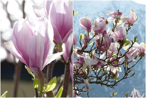 Stempelglück und Frühlingsgarten2
