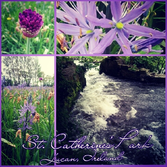 St . Catherine's Park, Lucan, Ireland.  #lucan #liffeyriver #walk #spring #violet #nature