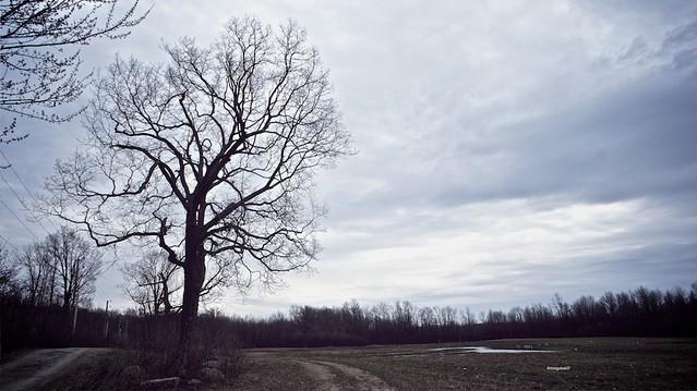 anteketborka.blogspot.com,   printemps 7
