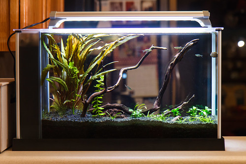 aquarium plants partially through transition to submersed