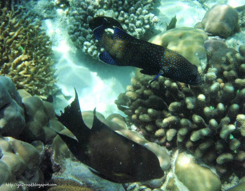 Рыбы Fihalhohi