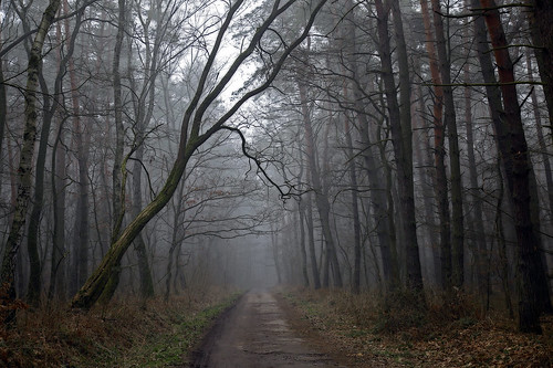 Misty and mysterious :)