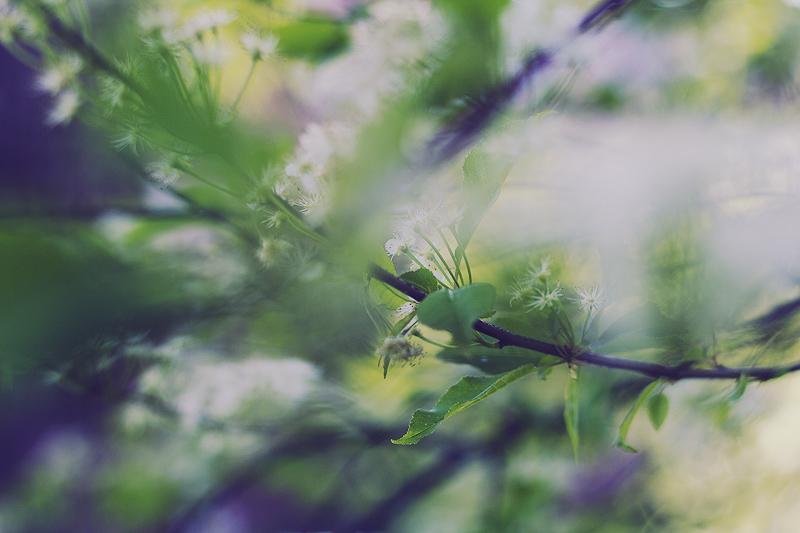 kukkiaiai