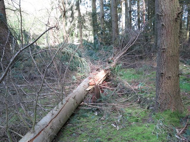 Splintered Tree Trunk