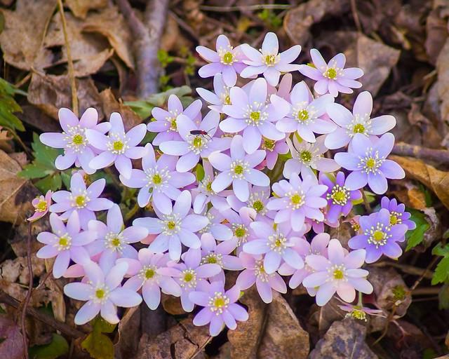 Sudden Outbreak of Spring