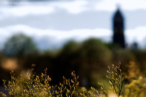 light nature colors beautiful spring dof blossom bokeh pov norrköping konicahexanon sonynex ilobsterit