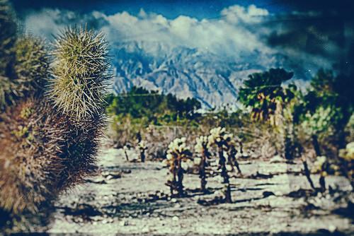 morning cactus usa cloud mountain landscape nikon desert coachellavalley d200 hdr springtime deserthotsprings riversidecounty hbmike2000 compcorner theretheoneswiththeholywoodthatdoesntsoundright