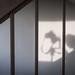 Shooting shadows by leilashleigh ∆