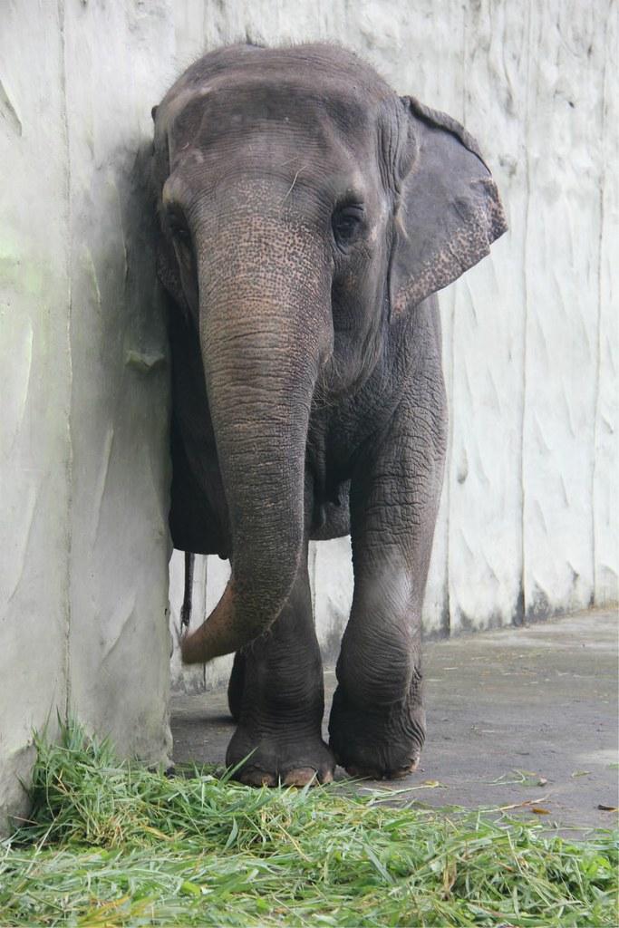 1melefante.jpg