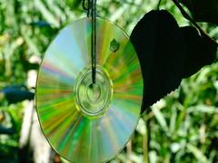 Madárűző lemez 1
