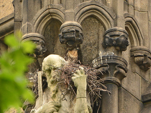 Cathedral Hawk Nest (1350)
