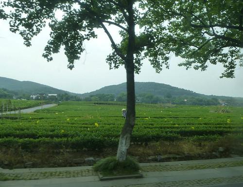 Zhejiang-Hangzhou-Longjing-The (63)