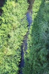 豐富的水草滿佈水面,卻讓五溝村居民心存疑慮。