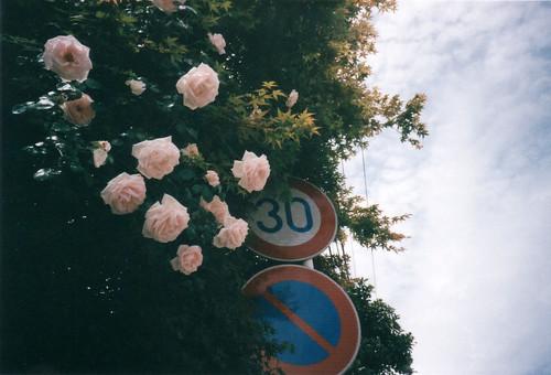 薔薇と標識
