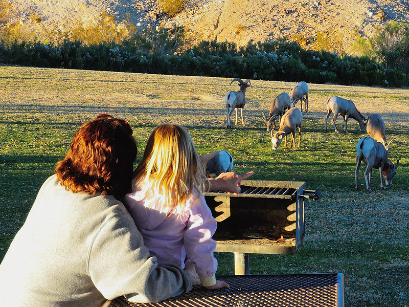 DSCN1346 Mother and Daughter Watching Bighorn Sheep