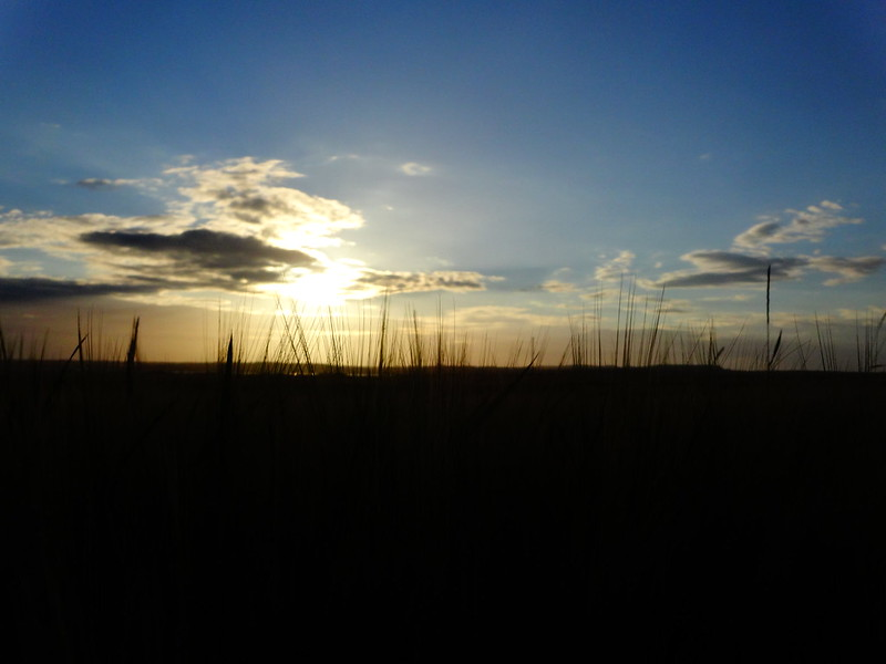 Sunset through the barley.