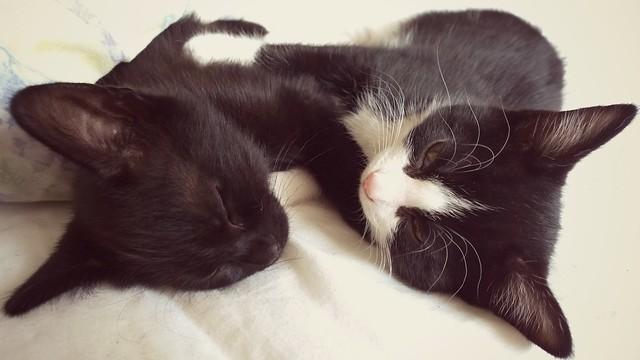 Nokia Lumia 1020 - Tuppence & Calypso kittens having a cuddle