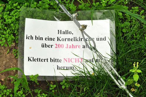 Lorsch Kloster Mittelalter mittelalterlich Gartenreisen Garten Klostergarten Kräutergarten Heilkräutergarten Apothekergarten Arzneigarten Heilkräuter Wildkräuter Arzneikräuter Klostermedizin Foto Brigitte Stolle