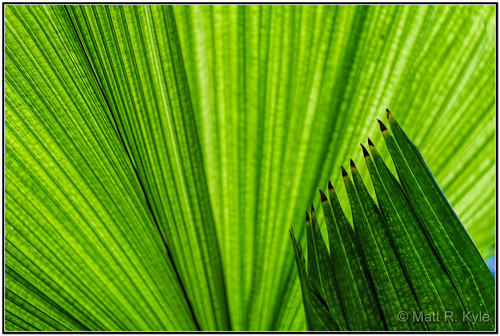plant green nature backlight canon leaf palm frond