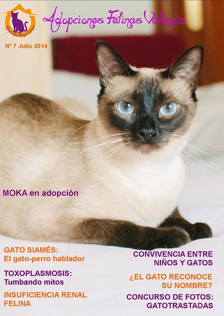 Revista nº 7 Julio 2014: Gato siamés: el gato-perro hablador. Tumbando mitos: la Toxoplasmosis 14669687975_3e8dd11db2_z