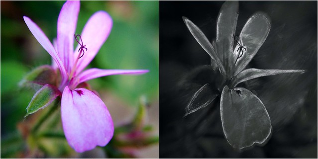 Flower Before and After