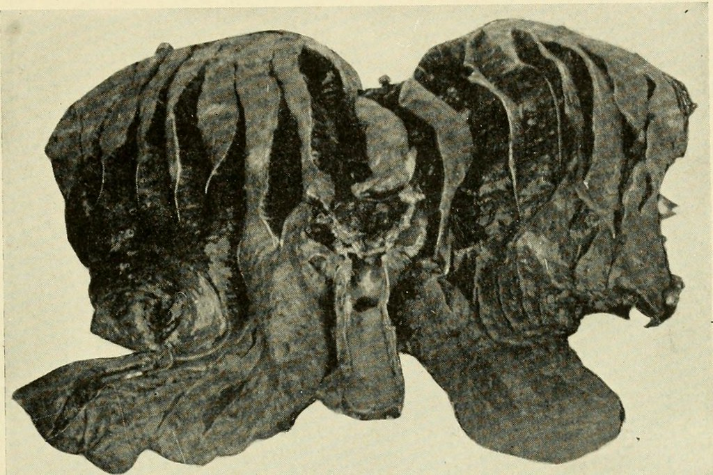 Image from page 192 of Veterinary post-mortem technic (1918)