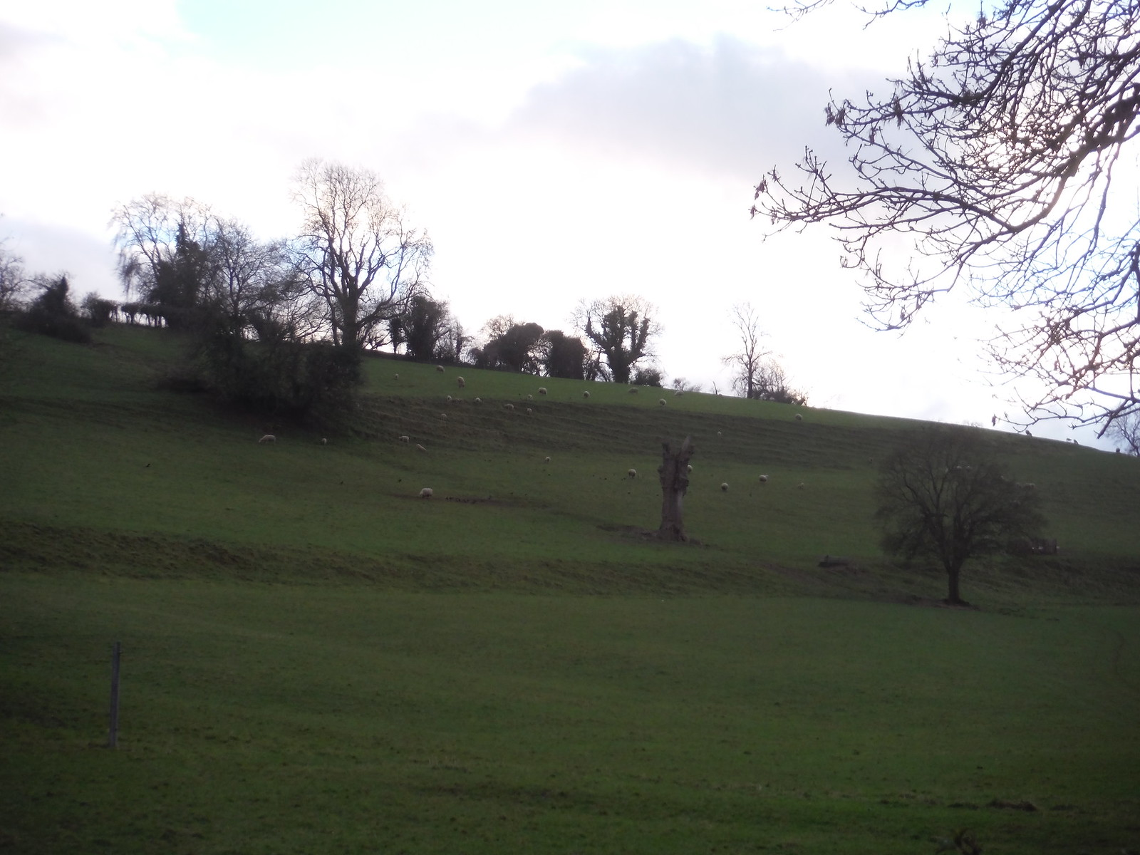 The final combe on the walk SWC Walk 284 Bruton Circular (via Hauser & Wirth Somerset) or from Castle Cary