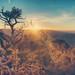 Desert View - Grand Canyon by Ray Devlin