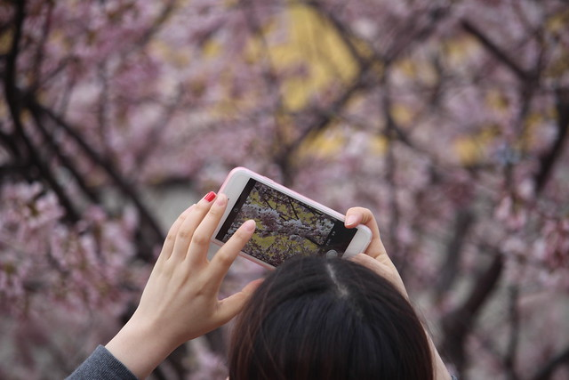 Capturing the Blossoms