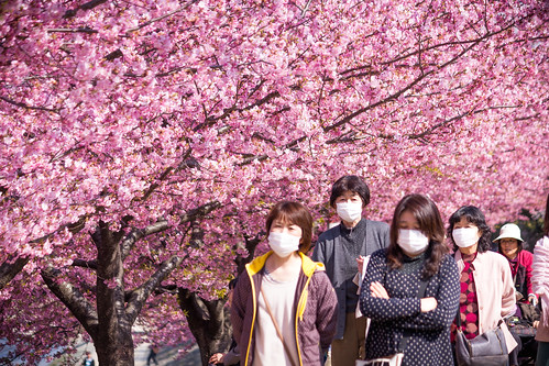 Masks and Sakura by David A. LaSpina, on Flickr