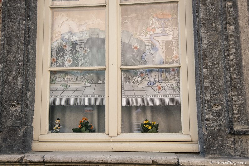 A window with cat curtains in Namur