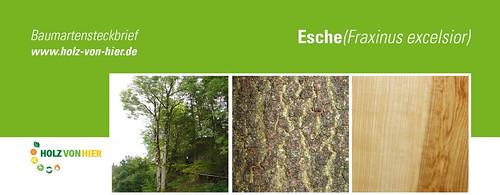 Esche-Header