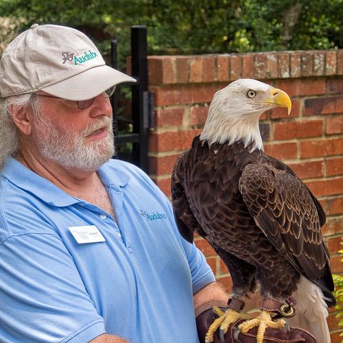 sam the eagle eyed eagle