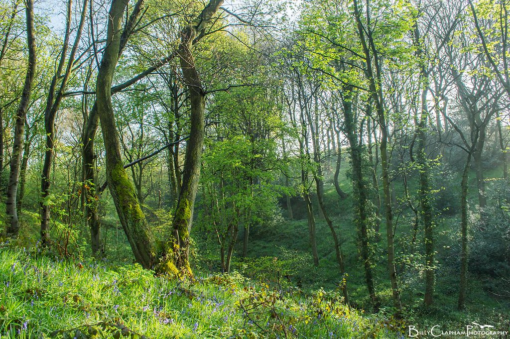 bluebell wood landscape sheffield