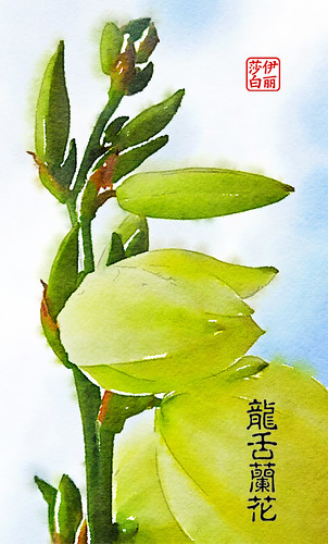 Yucca Blossom Painted in Waterlogue