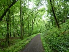 Soonwaldsteig durchs Grüne