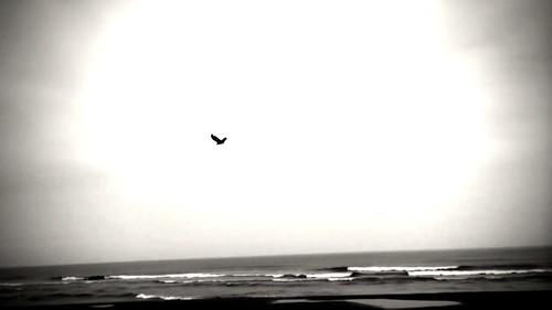 GREY BEACH 2