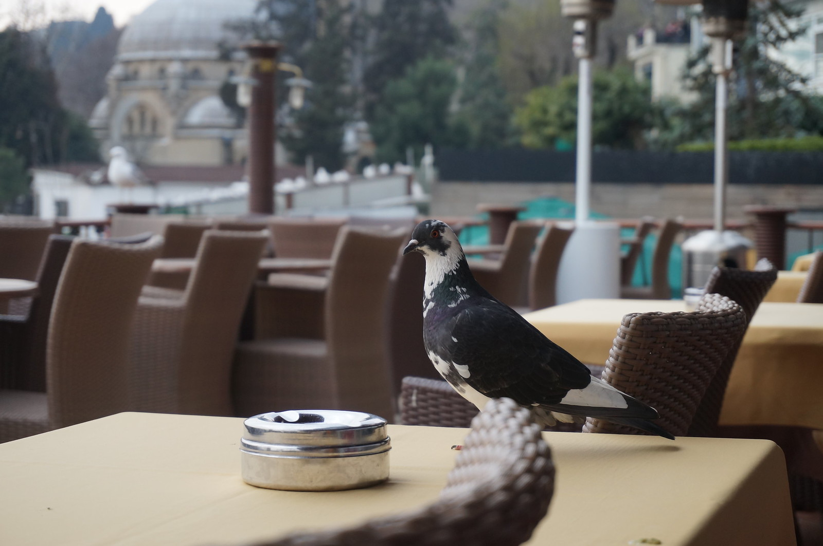 Pigeon Next to Ashtray