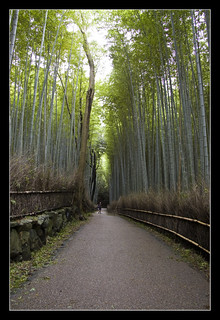 Bamboo forest @Kyoto, Japan